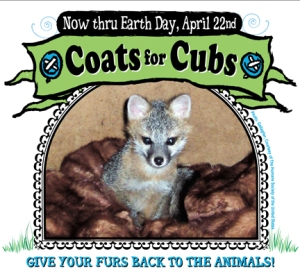 Microsoft Word - 2006 CoatsForCubs flier.doc